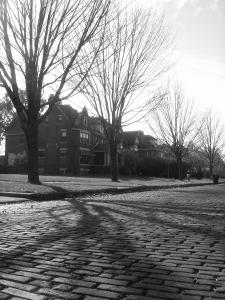 tree lined street 2