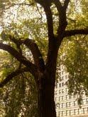 Art Institute Exterior, Chicago, 20__