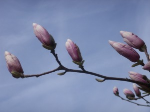 buds on a tree 3