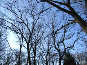 trees in Gary