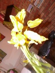 Flower, Ann Arbor, 2009