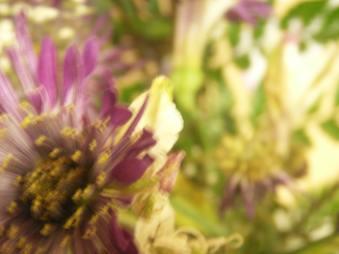 Flowers, Ann Arbor, 2009
