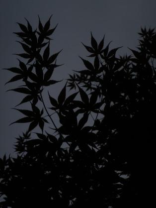 Leaves, Farmington Hills, 2011